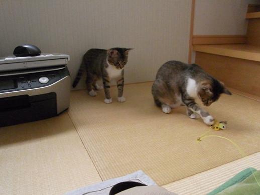 f:id:akiyochan15:20120509160229j:image