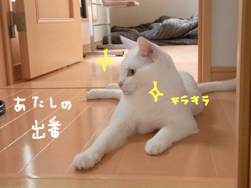 f:id:akiyochan15:20120510163420j:image