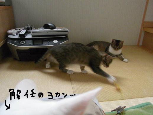 f:id:akiyochan15:20120510173224j:image