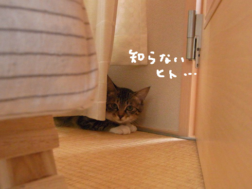 f:id:akiyochan15:20120510173700j:image:w360