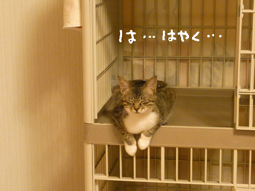 f:id:akiyochan15:20120514205535j:image