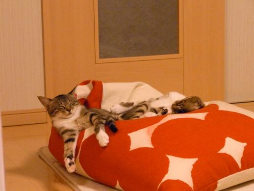 f:id:akiyochan15:20120516210524j:image