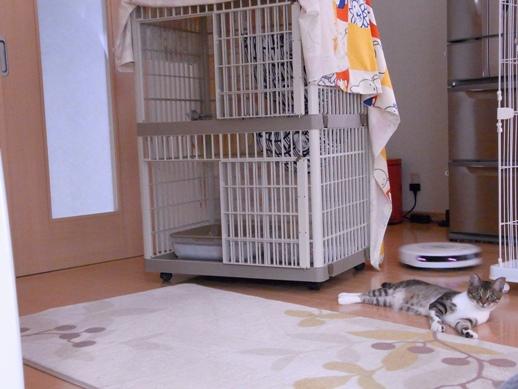 f:id:akiyochan15:20120619140911j:image