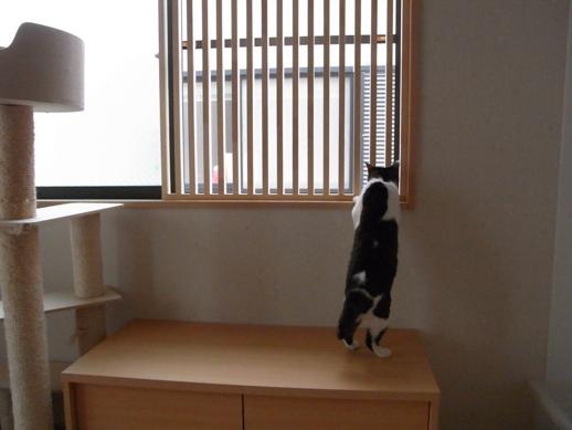 f:id:akiyochan15:20120701185324j:image