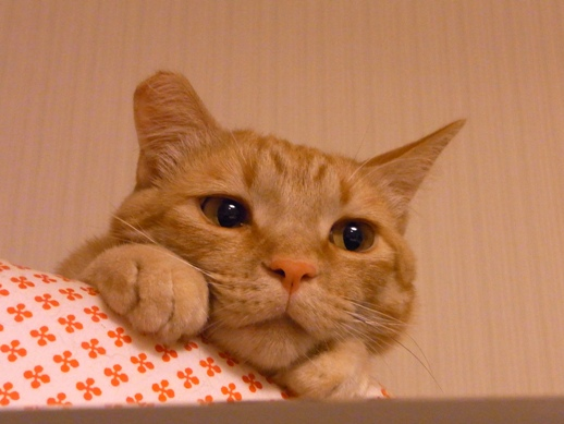 f:id:akiyochan15:20120704190655j:image:w300