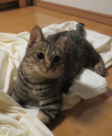 f:id:akiyochan15:20120717232233j:image:w389