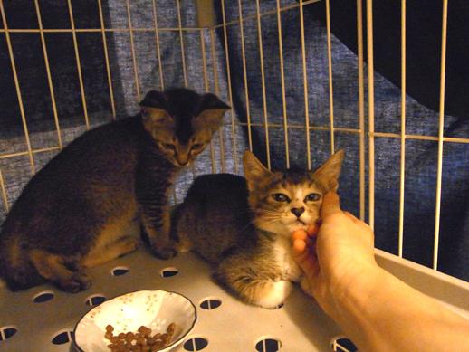 f:id:akiyochan15:20120812144257j:image