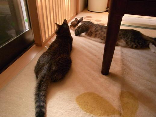 f:id:akiyochan15:20120922151728j:image