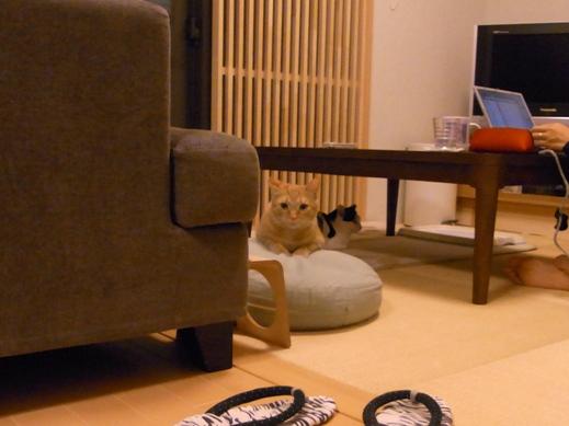 f:id:akiyochan15:20120926004745j:image