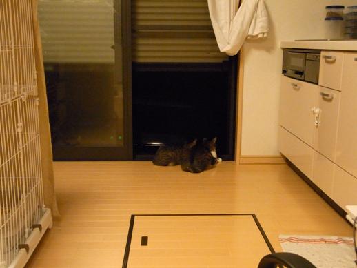 f:id:akiyochan15:20121001012303j:image