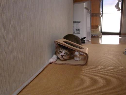 f:id:akiyochan15:20121007154444j:image