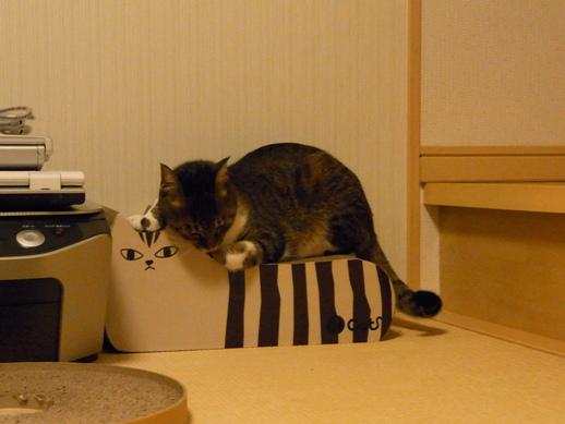 f:id:akiyochan15:20121007190622j:image