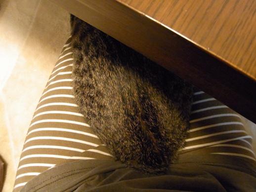 f:id:akiyochan15:20121010155643j:image