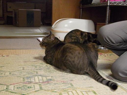 f:id:akiyochan15:20121011170944j:image
