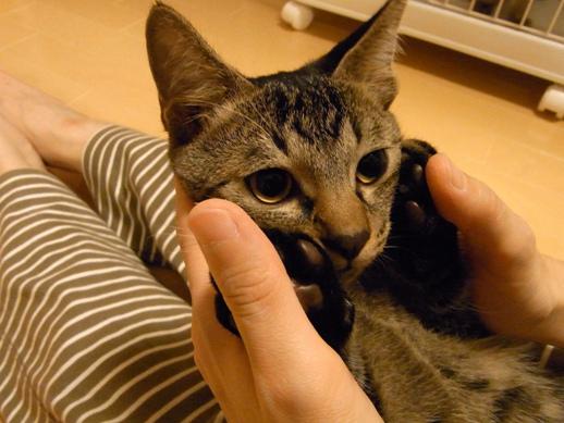 f:id:akiyochan15:20121016014031j:image