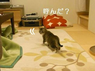 f:id:akiyochan15:20121017211821j:image