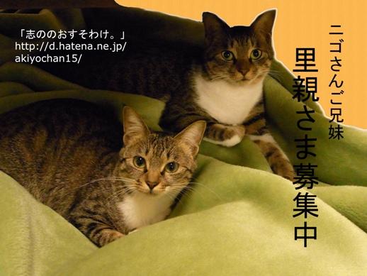 f:id:akiyochan15:20121030223316j:image