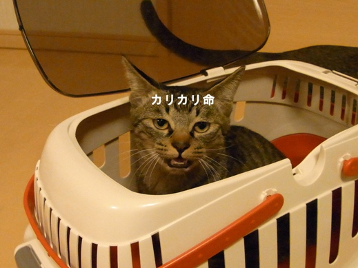 f:id:akiyochan15:20121113015021j:image