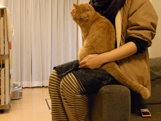 f:id:akiyochan15:20121114001158j:image