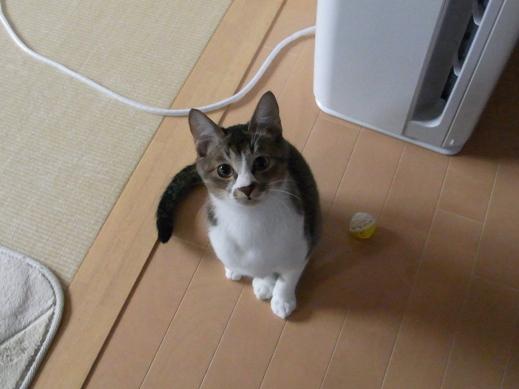 f:id:akiyochan15:20121118162950j:image