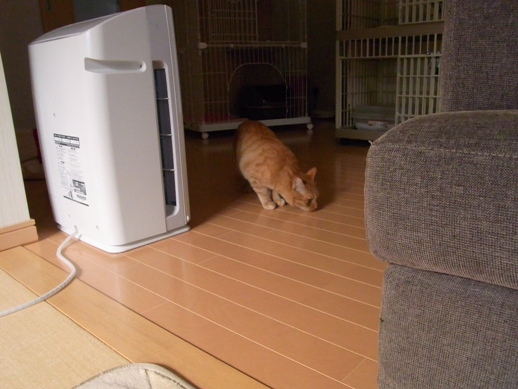 f:id:akiyochan15:20121118163337j:image