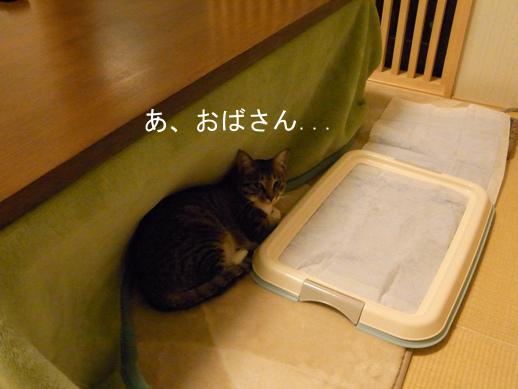 f:id:akiyochan15:20121120223359j:image