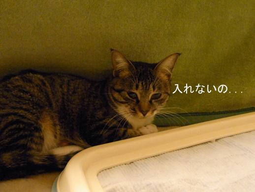 f:id:akiyochan15:20121121154916j:image