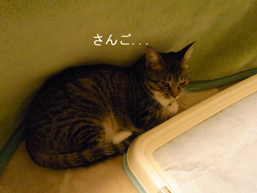 f:id:akiyochan15:20121121154917j:image