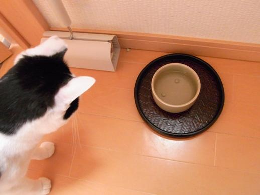 f:id:akiyochan15:20121123110806j:image