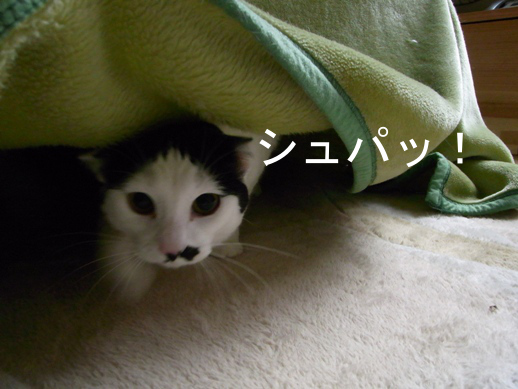 f:id:akiyochan15:20121123111618j:image