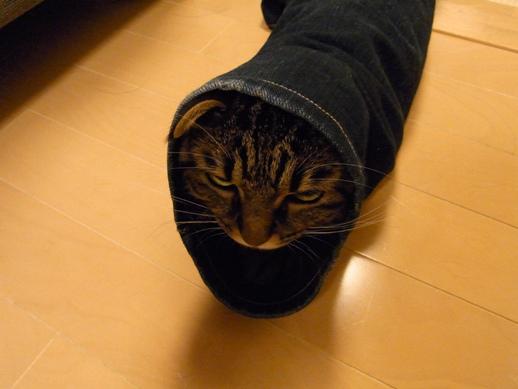 f:id:akiyochan15:20121125034630j:image