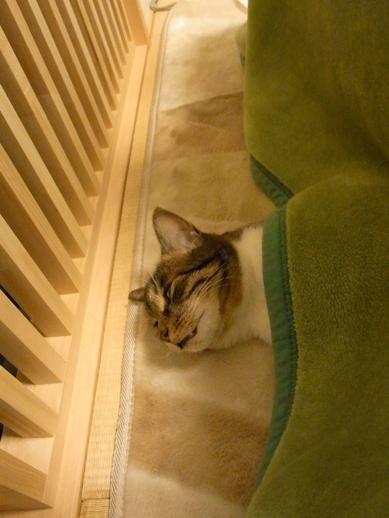 f:id:akiyochan15:20121125215950j:image