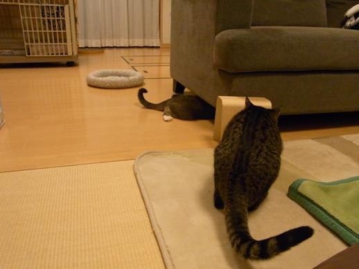 f:id:akiyochan15:20121129185619j:image