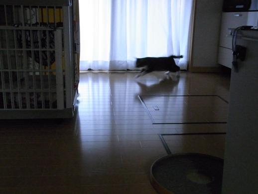 f:id:akiyochan15:20121203155639j:image