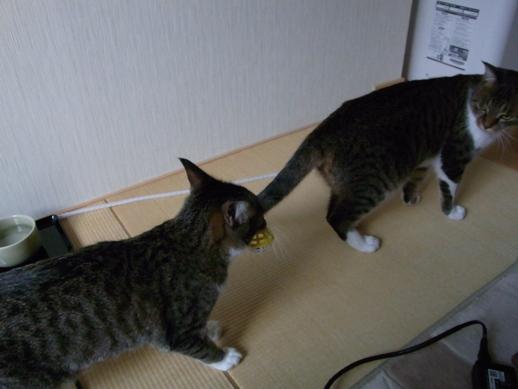f:id:akiyochan15:20121203160301j:image