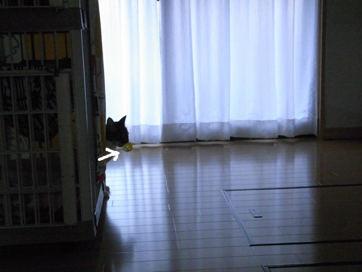 f:id:akiyochan15:20121203163446j:image