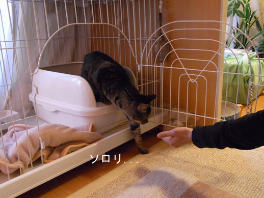 f:id:akiyochan15:20121209171256j:image