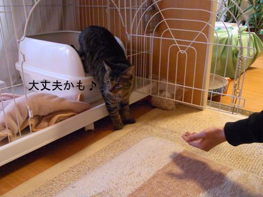 f:id:akiyochan15:20121209171335j:image