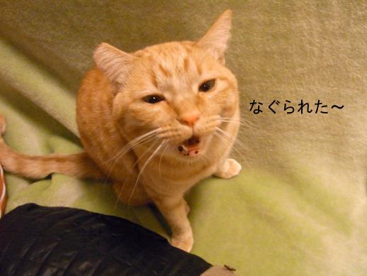 f:id:akiyochan15:20121210003148j:image