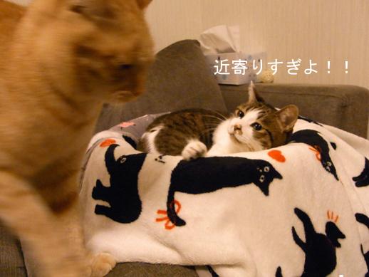 f:id:akiyochan15:20121210180859j:image