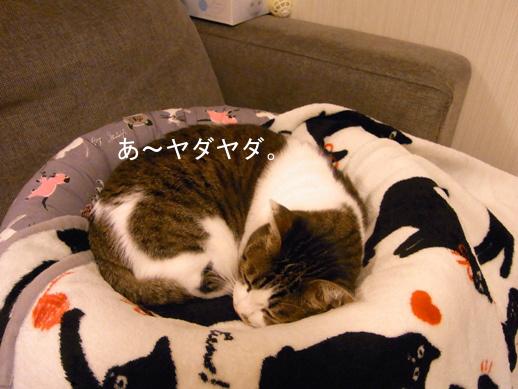 f:id:akiyochan15:20121210181603j:image