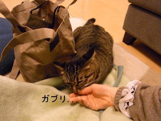 f:id:akiyochan15:20121214002115j:image
