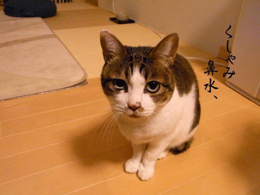 f:id:akiyochan15:20121216193944j:image