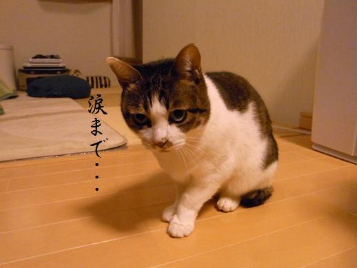 f:id:akiyochan15:20121216193951j:image