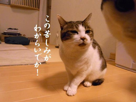 f:id:akiyochan15:20121216194000j:image