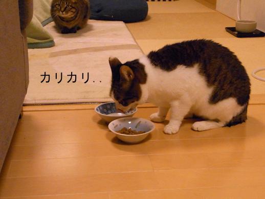 f:id:akiyochan15:20121216194801j:image