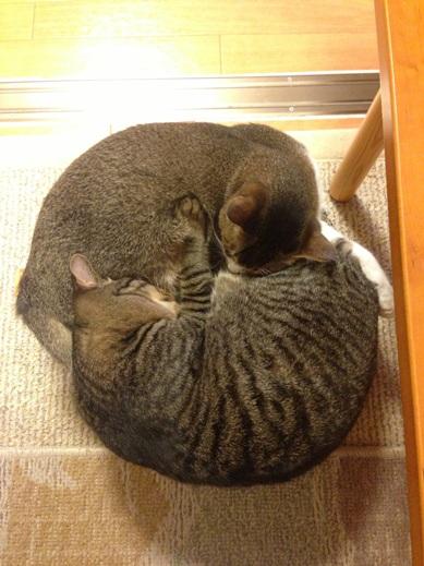 f:id:akiyochan15:20121218153208j:image:w280