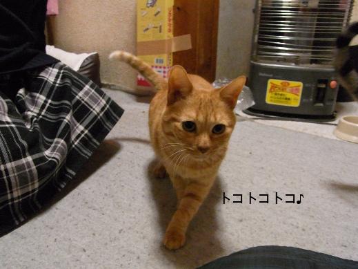 f:id:akiyochan15:20121219195334j:image