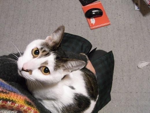 f:id:akiyochan15:20121219204447j:image