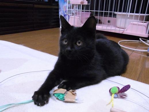 f:id:akiyochan15:20121227151016j:image